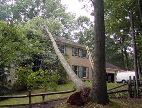 Storm Debris Damage from Tree